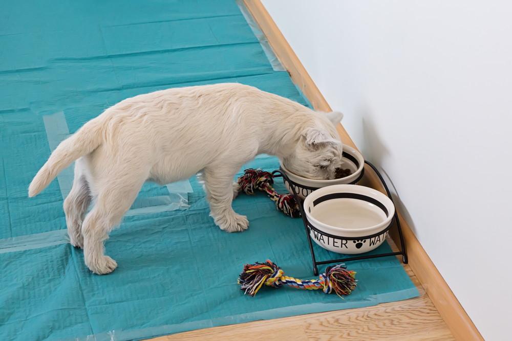 Mata do sikania dla psa