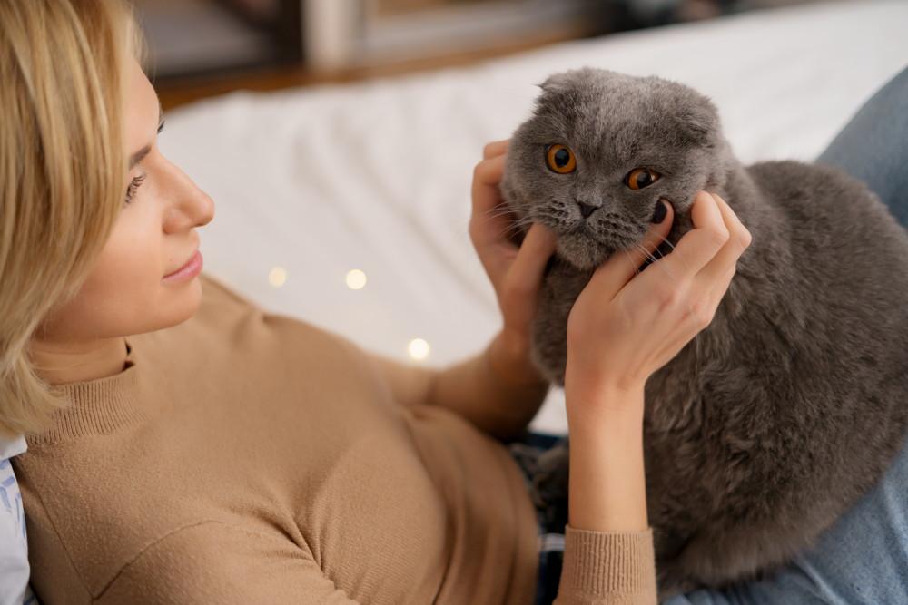 czemu koty mruczą
